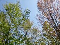 DSC_0919.jpg