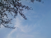 DSC_0932.jpg