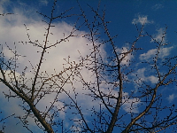 DSC_2795_1.jpg