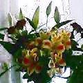 退職時にもらった花