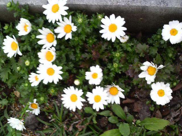 庭の花part2