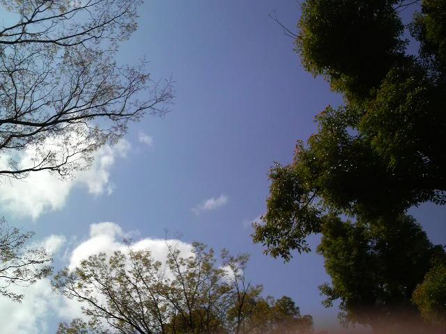 今日の空&amp;<br />  もっこうばらの蕾