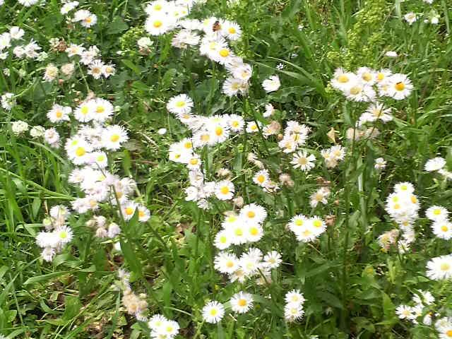 今日の空と花