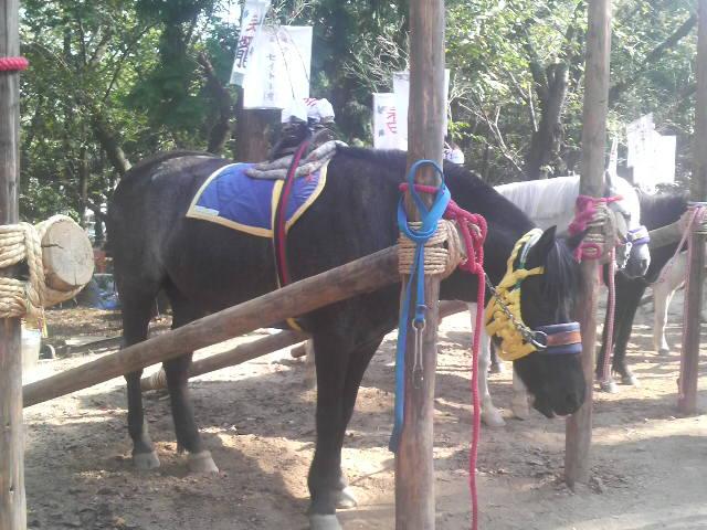 高浜おまんと祭りの馬